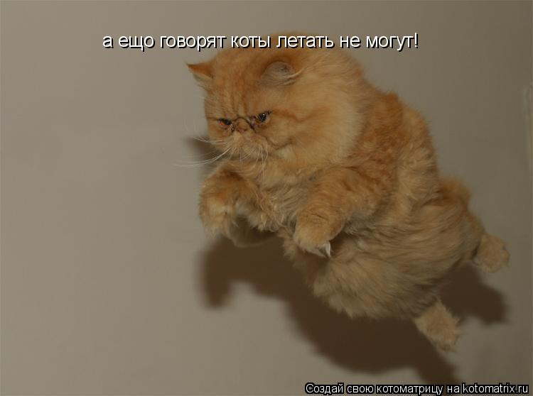 Котоматрица: а ещо говорят коты летать не могут!