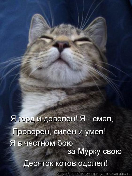 Котоматрица: Я горд и доволен! Я - смел, Проворен, силён и умел!  Я в честном бою  за Мурку свою Десяток котов одолел!