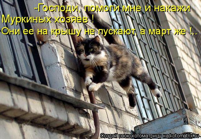 Котоматрица: -Господи, помоги мне и накажи  Муркиных хозяев ! Они ее на крышу не пускают, а март же !..