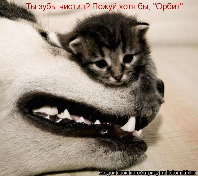 """Котоматрица: Ты зубы чистил? Пожуй,хотя бы, """"Орбит"""""""