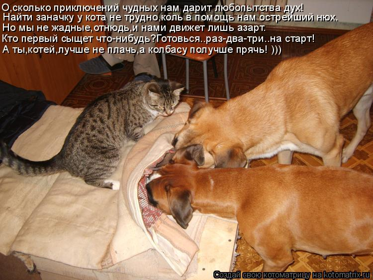 Котоматрица: О,сколько приключений чудных нам дарит любопытства дух! Найти заначку у кота не трудно,коль в помощь нам острейший нюх. Но мы не жадные,отню