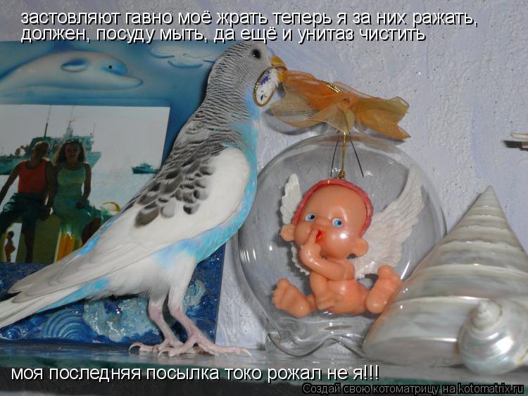 Котоматрица: застовляют гавно моё жрать теперь я за них ражать, должен, посуду мыть, да ещё и унитаз чистить моя последняя посылка токо рожал не я!!!