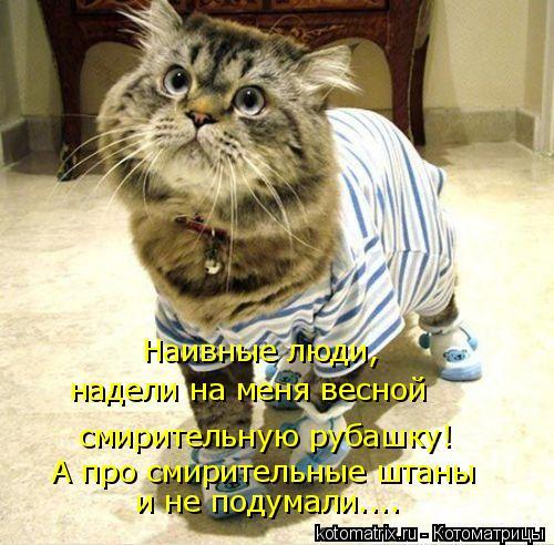 Котоматрица: смирительную рубашку! Наивные люди,  надели на меня весной  А про смирительные штаны и не подумали....