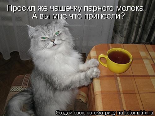 Котоматрица: Просил же чашечку парного молока! А вы мне что принесли?