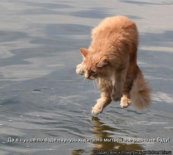 Котоматрица: Да я лучше по воде научусь ходить,но мыться всё равно не буду!
