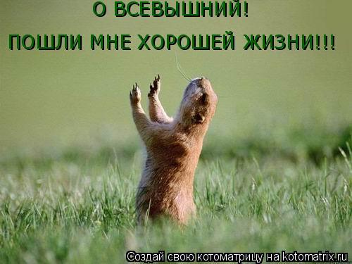 Котоматрица: О ВСЕВЫШНИЙ! ПОШЛИ МНЕ ХОРОШЕЙ ЖИЗНИ!!!