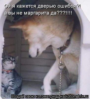 Котоматрица: Ой я кажется дверью ошибся?! а вы не маргарита да???!!!!
