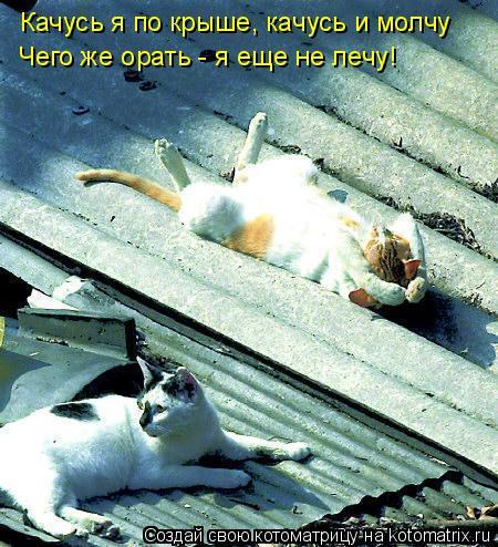 Котоматрица: Качусь я по крыше, качусь и молчу Чего же орать - я еще не лечу!