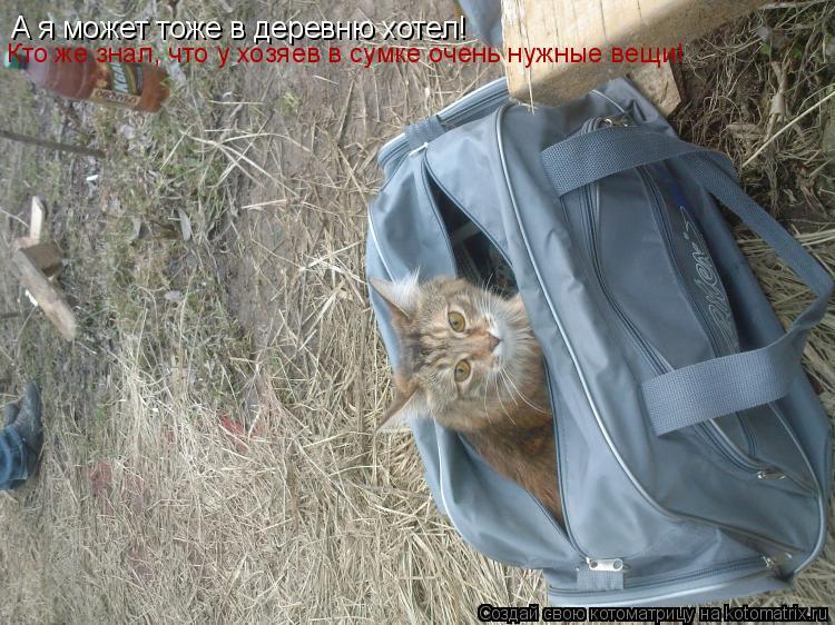 Котоматрица: А я может тоже в деревню хотел!  Кто же знал, что у хозяев в сумке очень нужные вещи!