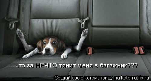 Котоматрица: что за НЕЧТО тянит меня в багажник???