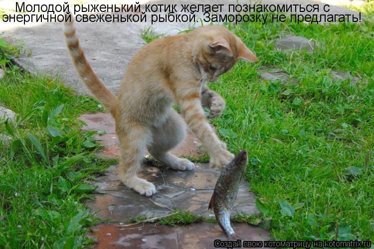 Котоматрица: Молодой рыженький котик желает познакомиться с  энергичной свеженькой рыбкой. Заморозку не предлагать!