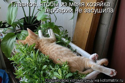 Котоматрица: Главное, чтобы из меня хозяйка гербарий не засушила