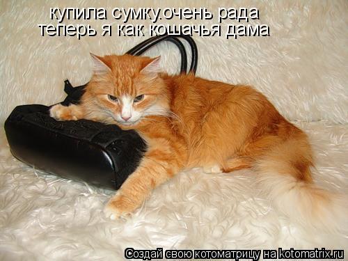 Котоматрица: купила сумку.очень рада теперь я как кошачья дама