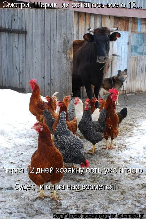 Котоматрица: Смотри, Шарик, их осталось всего 12... Через 12 дней хозяину есть уже нечего будет,  и он за нас возмется!