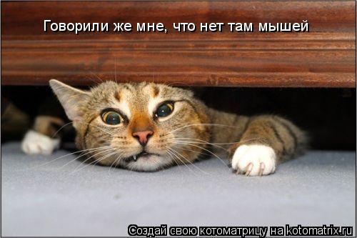 Котоматрица: Говорили же мне, что нет там мышей
