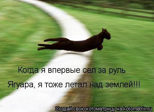 Котоматрица: Когда я впервые сел за руль Ягуара, я тоже летал над землей!!!