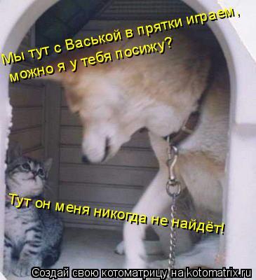 Котоматрица: Мы тут с Васькой в прятки играем, можно я у тебя посижу? Тут он меня никогда не найдёт!