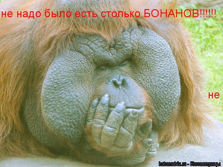 Котоматрица: не надо было есть столько БОНАНОВ!!!!!! не надо было есть столько БОНАНОВ!!!!!!