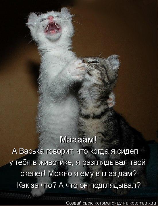 Котоматрица: Маааам! А Васька говорит, что когда я сидел у тебя в животике, я разглядывал твой скелет! Можно я ему в глаз дам? Как за что? А что он подглядыв