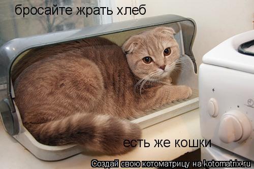 Котоматрица: бросайте жрать хлеб есть же кошки