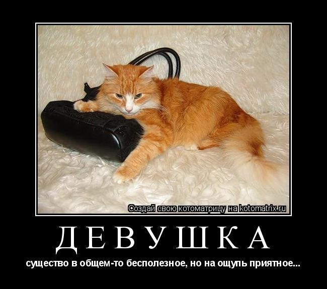 Котоматрица: Девушка существо в общем-то бесполезное, но на ощупь приятное...