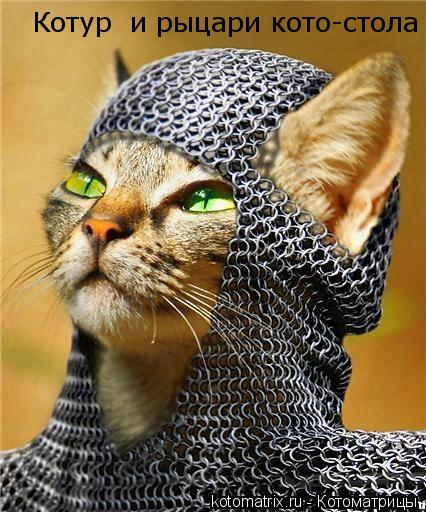 Котоматрица: Котур  и рыцари кото-стола