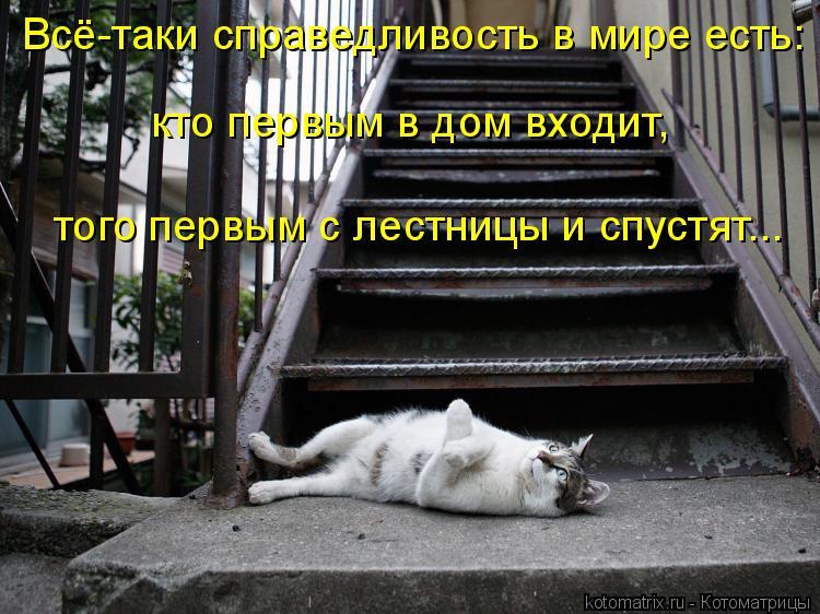 Котоматрица: Всё-таки справедливость в мире есть: кто первым в дом входит, того первым с лестницы и спустят...