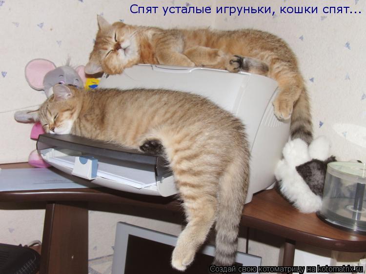 Котоматрица: Спят усталые игруньки, кошки спят...