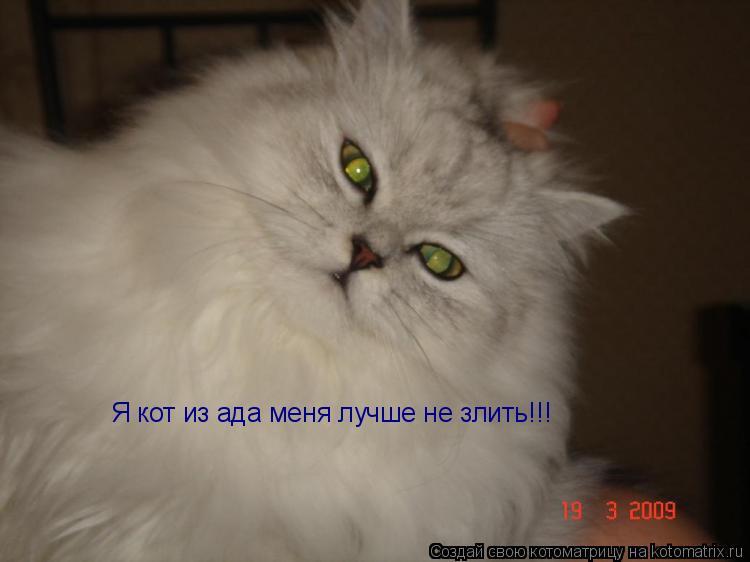 Котоматрица: Я кот из ада меня лучше не злить!!!