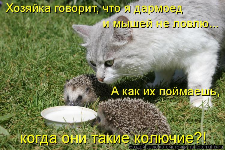 Котоматрица: Хозяйка говорит, что я дармоед и мышей не ловлю... когда они такие колючие?! А как их поймаешь,