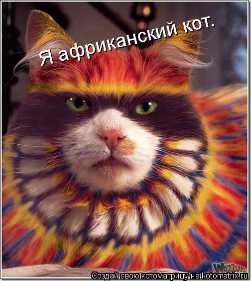 Котоматрица: Я африканский кот.