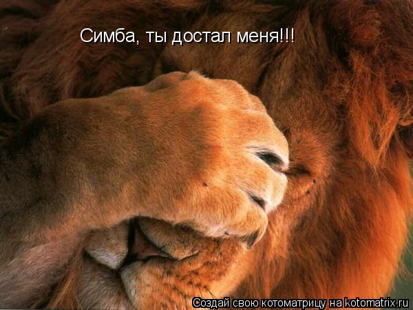 Котоматрица: Симба, ты достал меня!!!