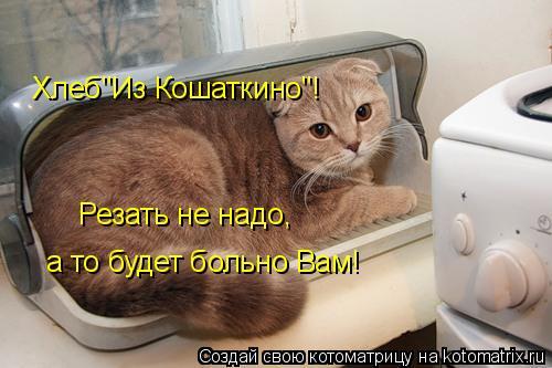 """Котоматрица: Хлеб""""Из Кошаткино""""! Резать не надо, а то будет больно Вам!"""