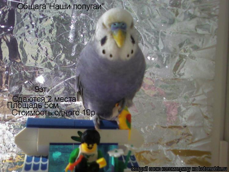 """Котоматрица: Общага""""Наши попугаи"""" Сдаются 2 места Площадь 5см Стоимость одного 10р 9эт."""