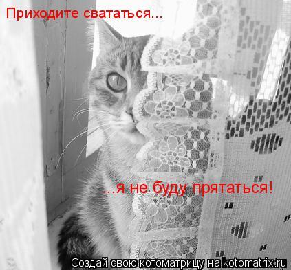 Котоматрица: Приходите свататься... ...я не буду прятаться!