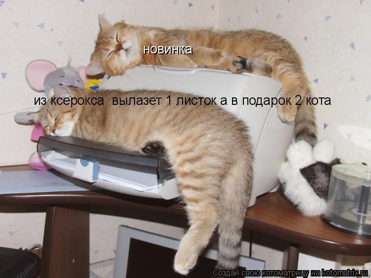 Котоматрица: новинка из ксерокса  вылазет 1 листок а в подарок 2 кота