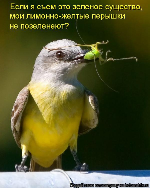 Котоматрица: Если я съем это зеленое существо,  мои лимонно-желтые перышки не позеленеют?