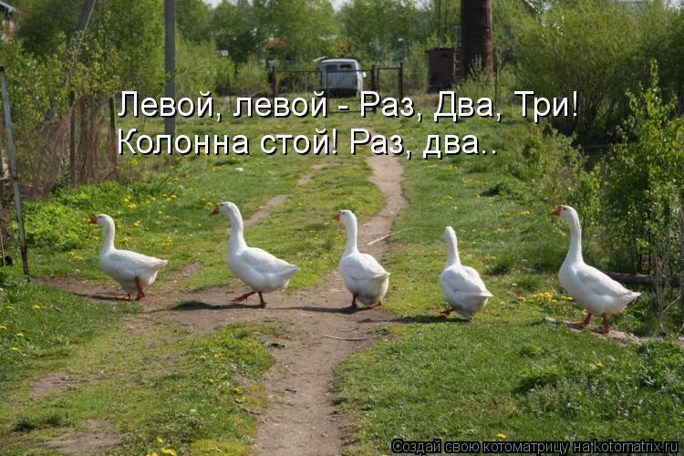 Котоматрица: Левой, левой - Раз, Два, Три! Колонна стой! Раз, два..