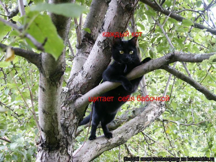 Котоматрица: каждый кот щитает  себя бабочкой