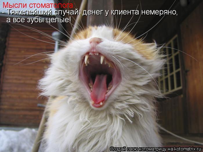 Котоматрица: Мысли стоматолога: - Тяжелейший случай: денег у клиента немеряно, а все зубы целые!
