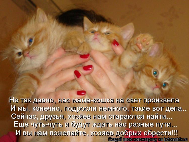 Котоматрица: Не так давно, нас мама-кошка на свет произвела И мы, конечно, подросли немного, такие вот дела.. Сейчас, друзья, хозяев нам стараются найти... Е