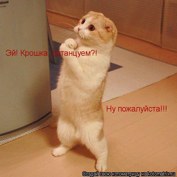 Котоматрица: Эй! Крошка, потанцуем?! Ну пожалуйста!!!