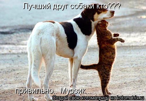 Котоматрица: Лучший друг собаки кто??? привильно.. Мурзик...