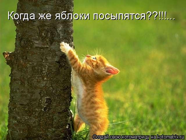 Котоматрица: Когда же яблоки посыпятся??!!!...