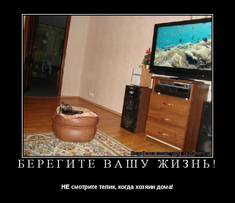 Котоматрица: Берегите вашу жизнь! НЕ смотрите телик, когда хозяин дома!