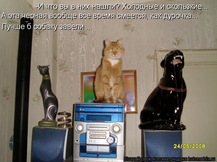 Котоматрица: -И что вы в них нашли? Холодные и скользкие... А эта черная вообще все время смеется, как дурочка... Лучше б собаку завели ...