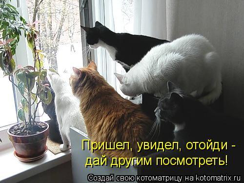 Котоматрица: Пришел, увидел, отойди - дай другим посмотреть!