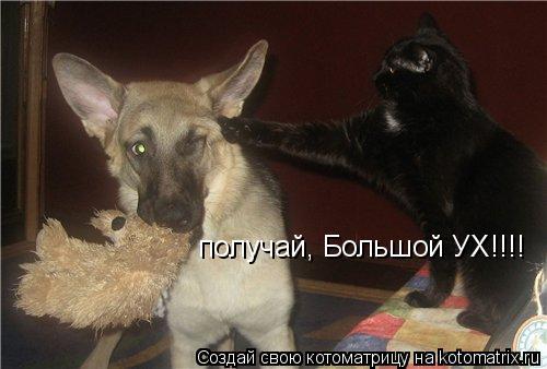 Котоматрица: киииииийййййяяяяаааааааааа!!!!!!!! получай, Большой УХ!!!!
