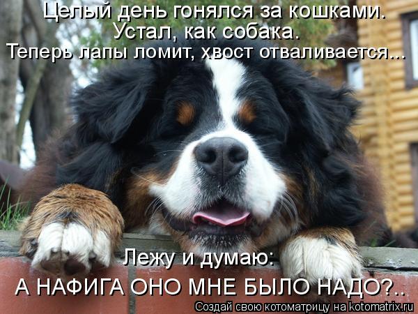 Котоматрица: Целый день гонялся за кошками. Устал, как собака. Теперь лапы ломит, хвост отваливается... Лежу и думаю: А НАФИГА ОНО МНЕ БЫЛО НАДО?..