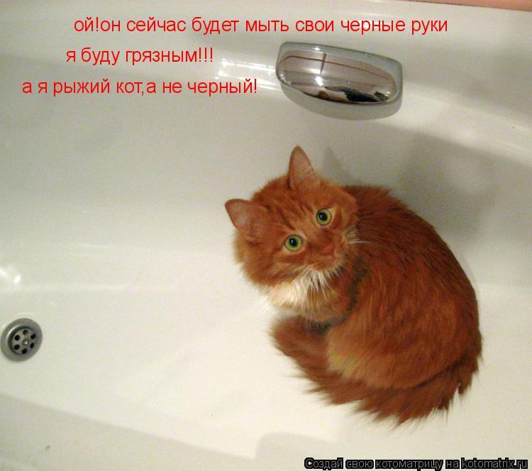 Котоматрица: ой!он сейчас будет мыть свои черные руки =(((я буду грязый ой!он сейчас будет мыть свои черные руки  я буду грязным!!! а я рыжий кот,а не черный!